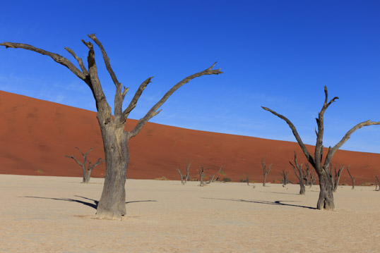 Sand and trees Deadvlei